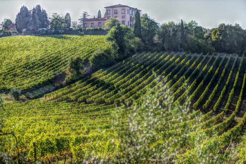 chianti-vineyard-tuscany